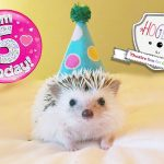 Hoglets is 5 years old