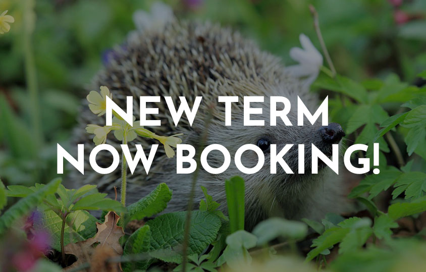 New hoglets term is now booking 2019